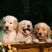 Gestão de Clínicas e Pet Shops com ênfase em desenvolvimento de produtos - 72 horas